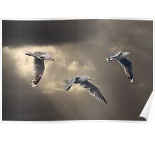 Heavens Gulls Poster
