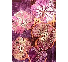 October's Garden - Monoprint Photographic Print