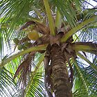 Palm Tree- A Different View by glennmp