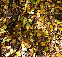 Autumn leaves on ground by KSissy