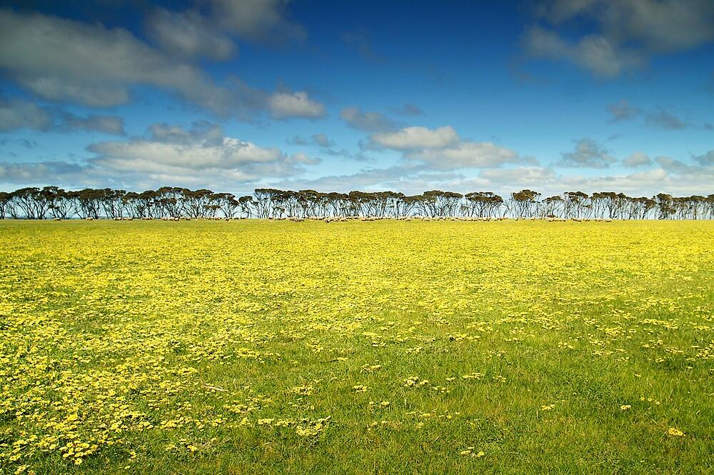 South Australia landscape serie 03 by ZoltanBalogh