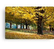 Wonderland - Autumn Maple Tree Leaf Storm Canvas Print