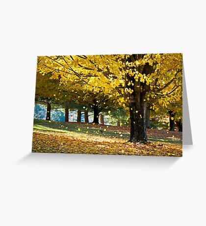 Wonderland - Autumn Maple Tree Leaf Storm Greeting Card