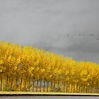 the yellow herd by LarsvandeGoor