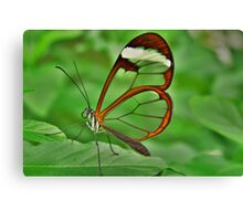 *GRETA OTO* *ESPEJITOS* *GLASSWING BUTTERFLY* Canvas Print