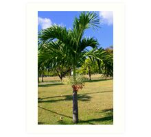 Palm Tree with Berries Art Print