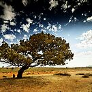 South Australia landscape serie 05 by ZoltanBalogh