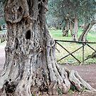 Telling Tales of Old-Villa Adriana-Italy by Deborah Downes