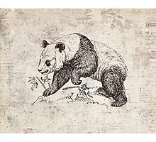 Vintage Panda Art Photographic Print