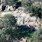 Ancient Burial Ground-Civita Castellana-Italy by Deborah Downes