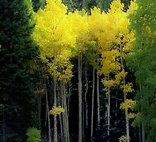 Aspen in RMNP by Linda Sparks