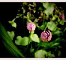 In my herb garden by Bluedamselfly