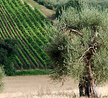 In a Tuscan Field-Montalcino-Tuscany by Deborah Downes