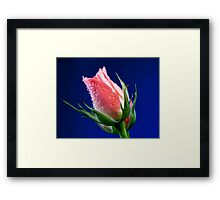 Pink Insight Framed Print