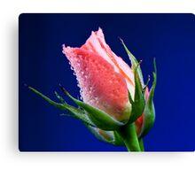 Pink Insight Canvas Print