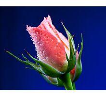 Pink Insight Photographic Print