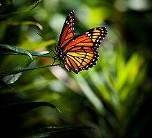 Monarch Beauty by Dale Frazier