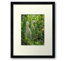 Three white wire ducks Framed Print