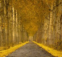 Golden Fall by LarsvandeGoor