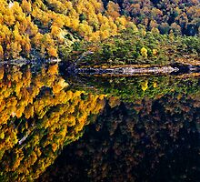Two autumn forests by VisualNorway