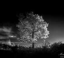 Autumn Illuminations by Martin Finlayson