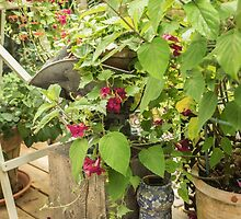 Pots and flowers on a deck by Judi Lion