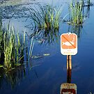 No Fishing??? by Sharon Woerner
