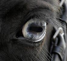 Blue eye by laurav