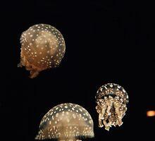Japanese Jellies by reganjackson