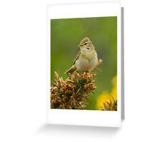 Willow Warbler Greeting Card