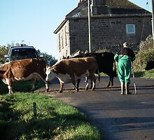 Cornish Rush Hour by Dawn Warren