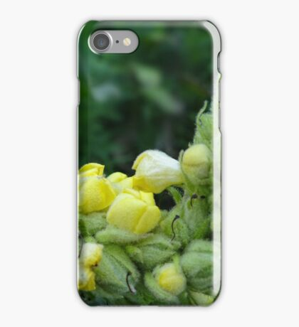 Common Mullein iPhone Case/Skin
