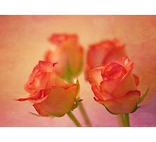 A bokeh of roses Photographic Print
