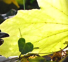 Leaf Love by Alley Aber