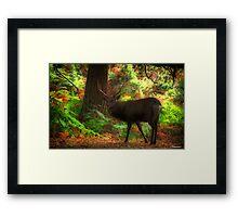 Deer Stalking Framed Print