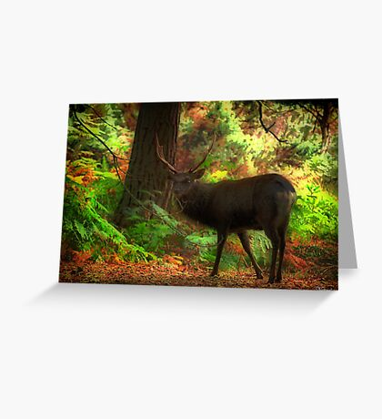 Deer Stalking Greeting Card
