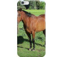 Beautiful Horse iPhone Case/Skin