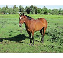 Beautiful Horse Photographic Print