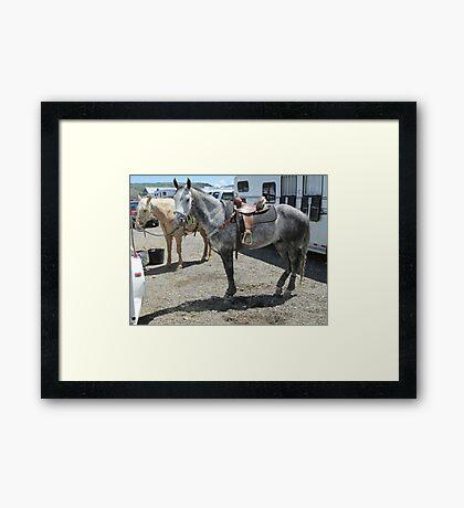 Grey horse Framed Print
