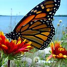 flutter by Erika Snell