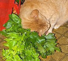 Catnip!  Phooey - give me Celery! by Odille Esmonde-Morgan