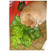Catnip!  Phooey - give me Celery! Poster