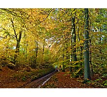 Autumnal forest lane Photographic Print