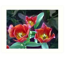 Padua Tulips Art Print