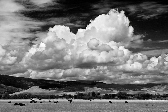 Colorado Cattle Ranch In Black and White by nikongreg