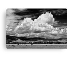 Colorado Cattle Ranch In Black and White Canvas Print