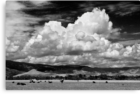 Colorado Cattle Ranch In Black and White by Gregory J Summers
