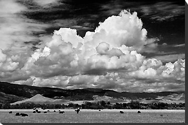 Colorado Cattle Ranch In Black and White by Greg Summers