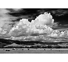 Colorado Cattle Ranch In Black and White Photographic Print