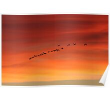sunset geese Poster